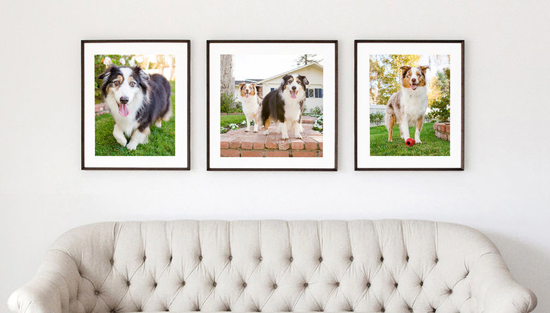Pet-Photography-Wall-Gallery