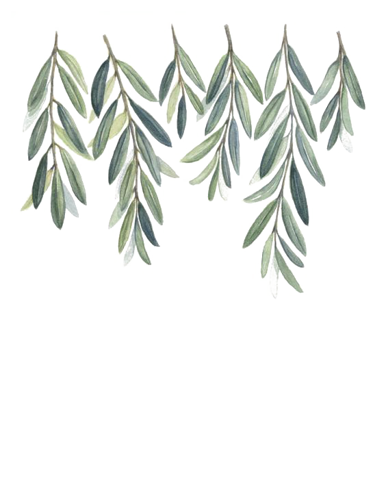 kisspng-olive-branch-watercolor-painting-5a6819390d55a7.4280687815167716410546