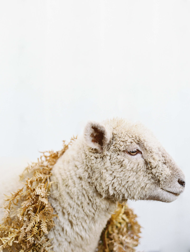 Wedding sheep with garland