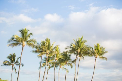 Hawaii Wedding Packages.Find Maui Wedding Packages For Hawaii Weddings At Venues