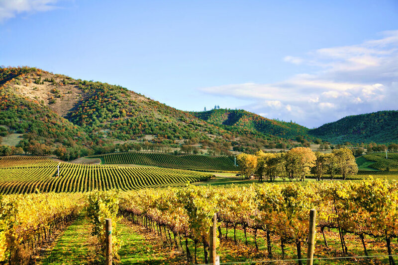 premiereluxurytravel-autumn-vineyard-Napa
