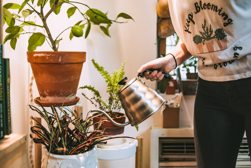 Woman waters her houseplants in her apartment