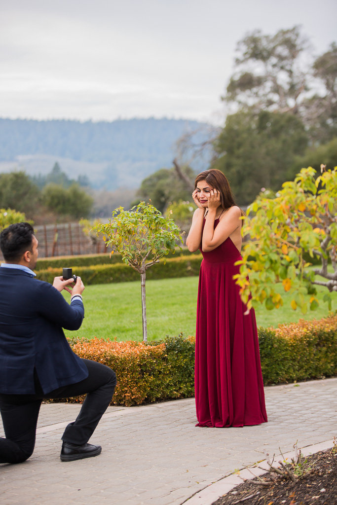 surprise proposal at ledson winery