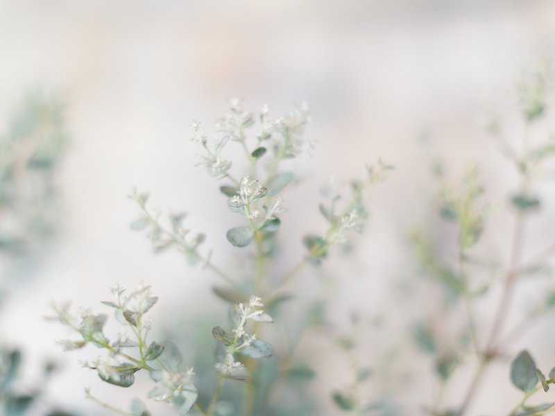 Flower, Detail, Wedding, Hochzeit,