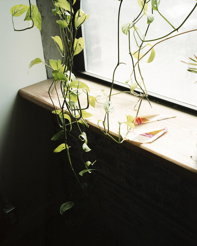 Paper airplanes sitting on a window sill with a hanging plant in the corner