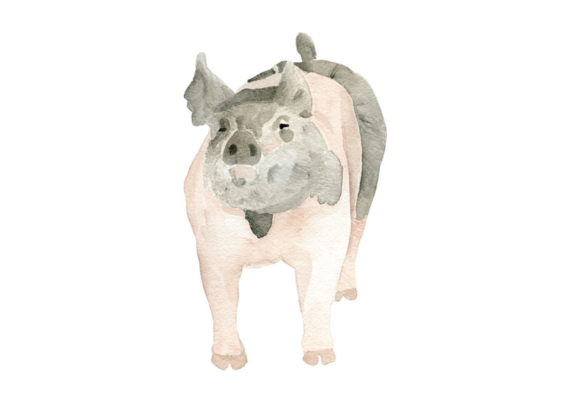 watercolor-pet-portrait-Phyllis-H-The-Welcoming-District copy copy