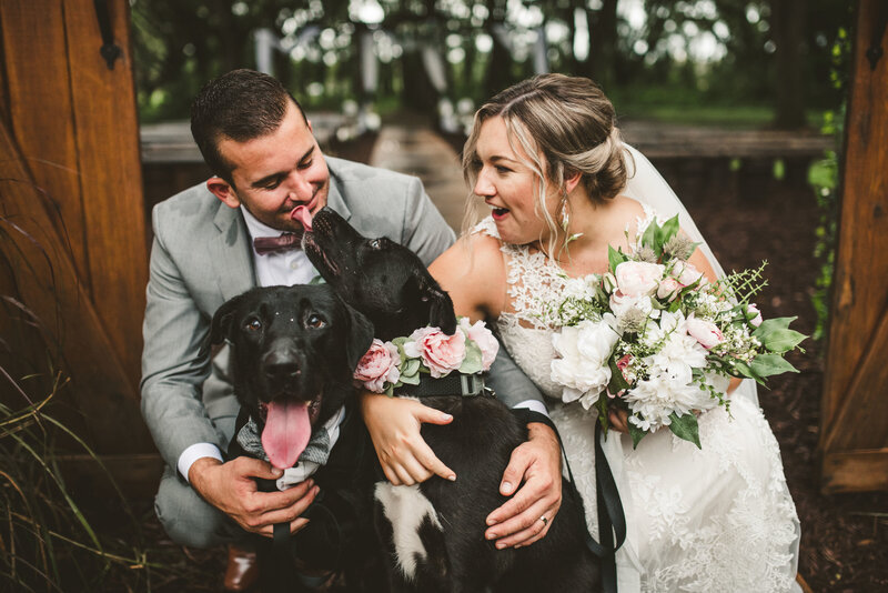 Dog in wedding_Furry Ventures