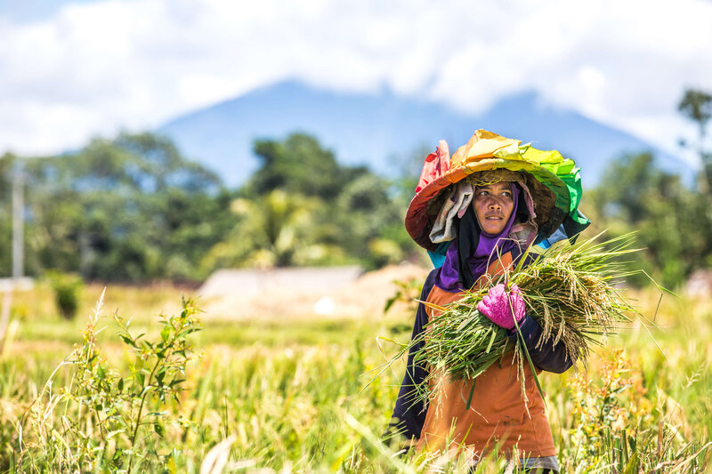 colorful rice field worker Bali