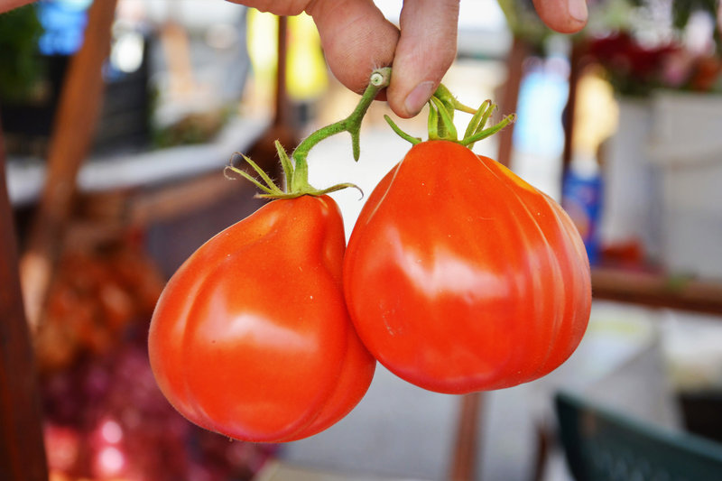 fingers holding two fresh Liguria tomatoes