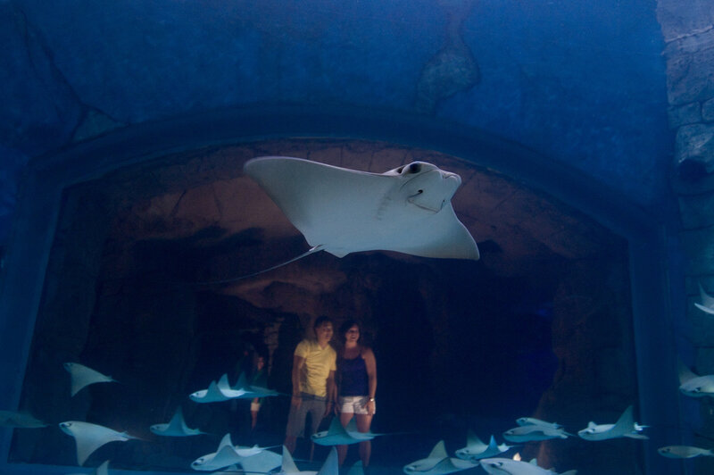 Surrounded by Rays at SeaWorlds Manta