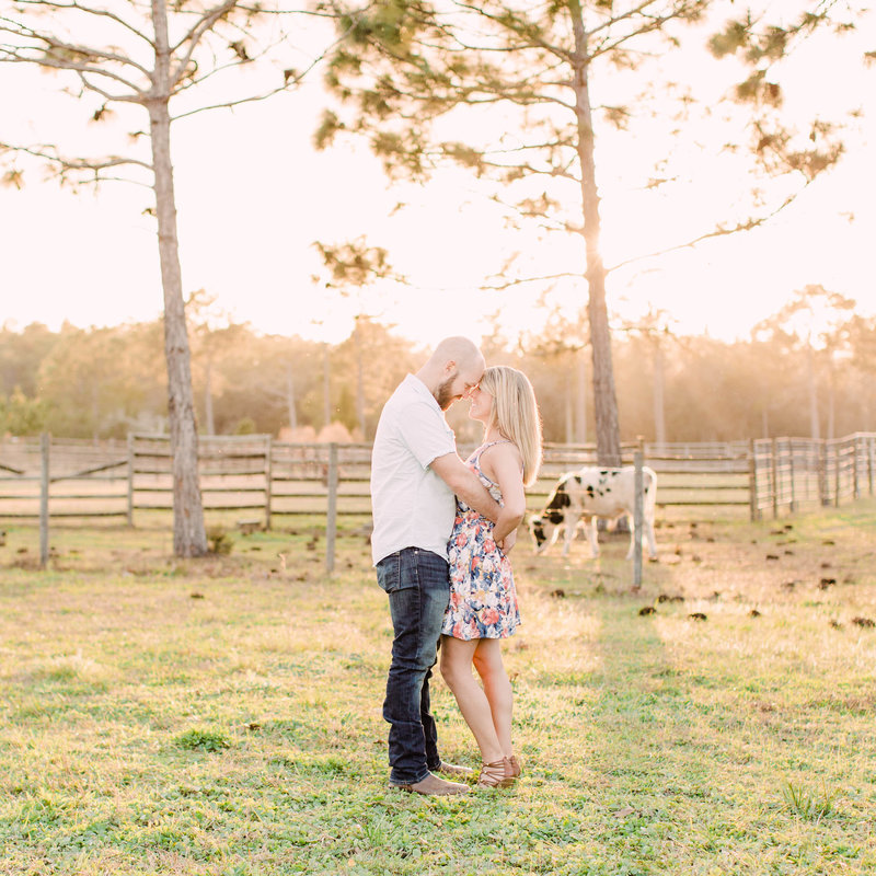 Engagement session in cow pasture