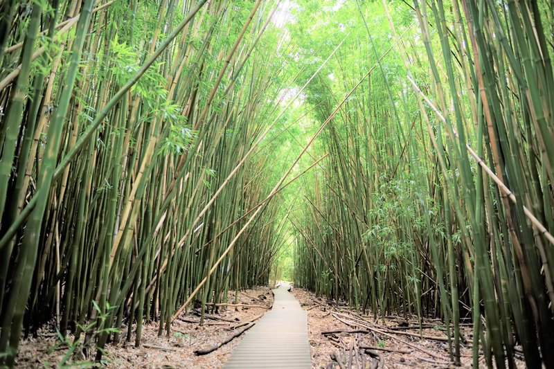 Pipiwai Bamboo Forest hiking trail
