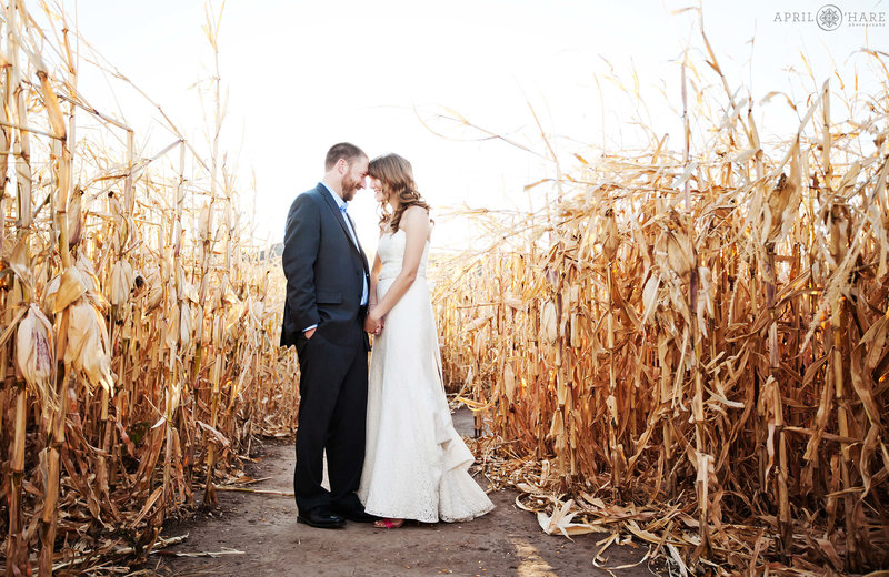 Wedding photography in a corn maze at Chatfield Farms