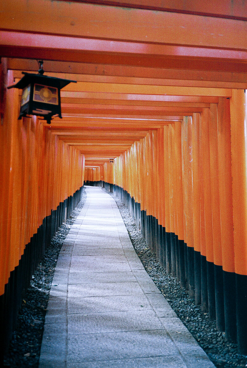 The red torii of Fushimi inari-taisha in Kyoto, Japan.
