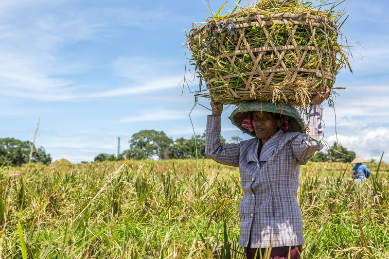 woman carrying lare basket on her head in Bali