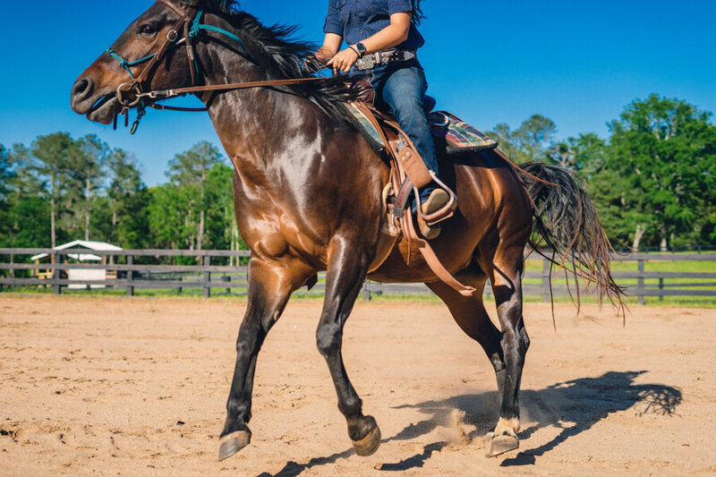 Guided canter and trot horseback adventure  in Georgia