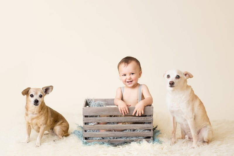 1 year old with dogs