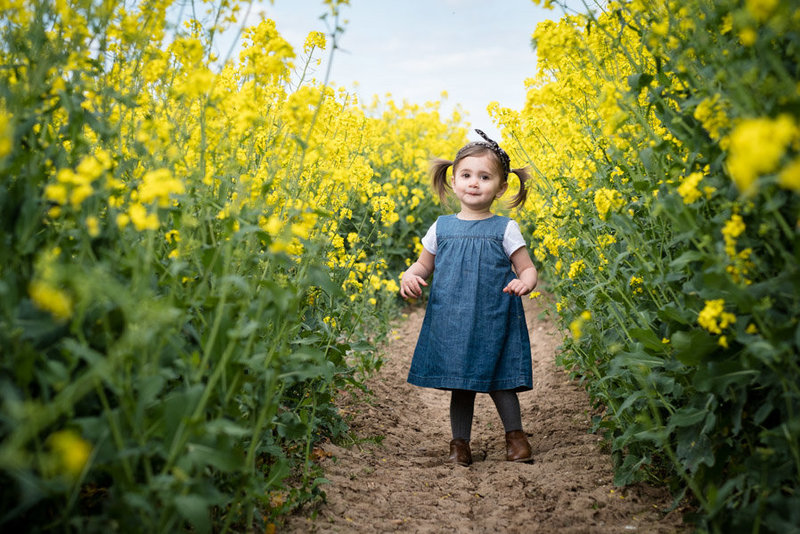 young female toddler dressed in denim walks through yellow rape seed fields