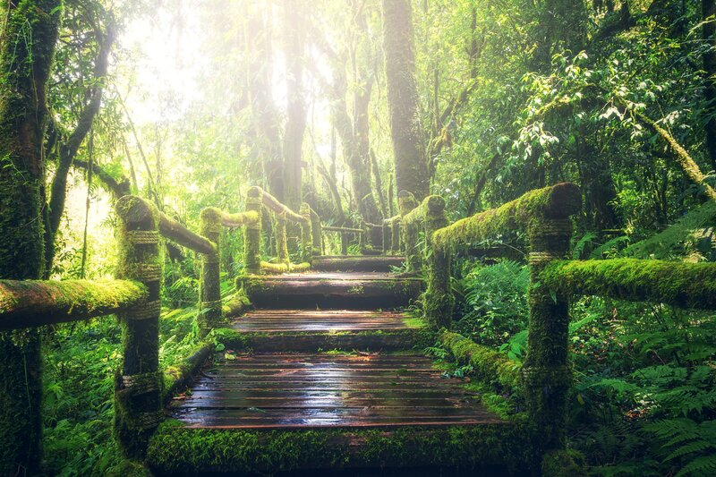 adventure-beautiful-boardwalk-bridge-235734