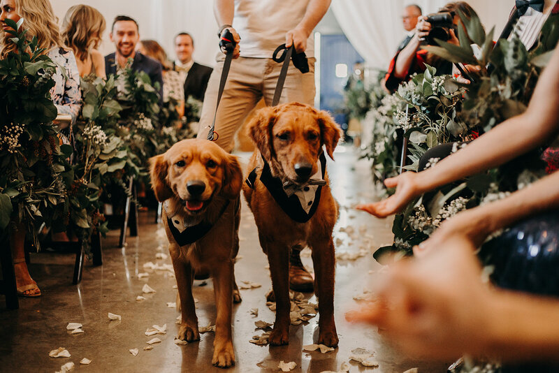 golden retriever in wedding