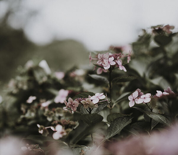 A group of small flowers on a dark background for anxiety treatment in Santa Clarita, CA for folks suffering from generalized anxiety disorder therapy with a skilled EMDR therapist dealing with PTSD in Santa Clarita, CA 91355