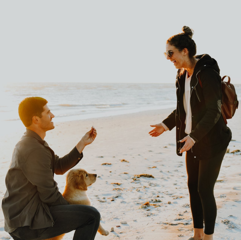 dog_in_proposal