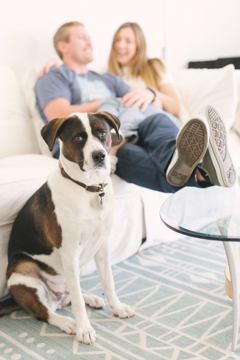 Dog looks at camera during lifestyle santa barbara engagement shoot
