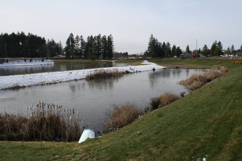 Steilacoom Ridge Stormwater Pond copy