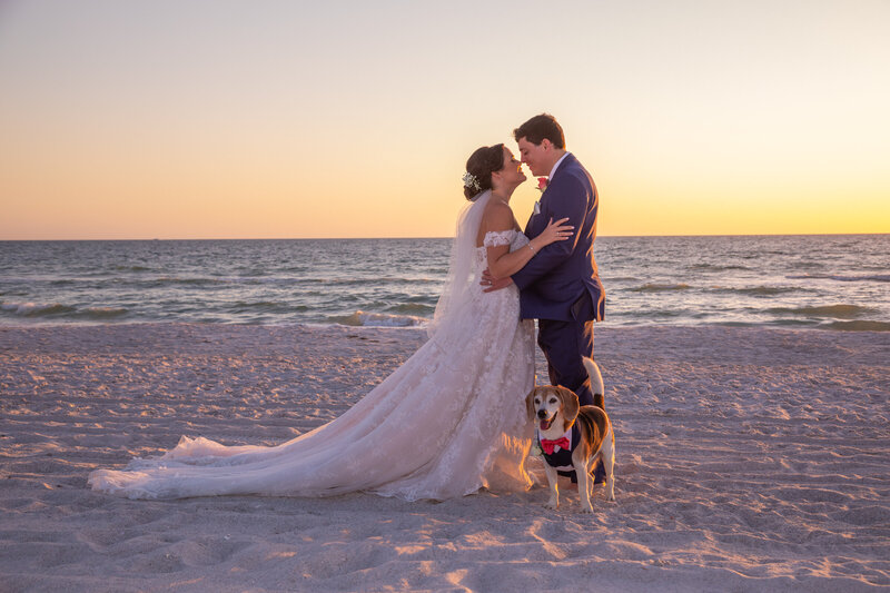 dog in beach wedding