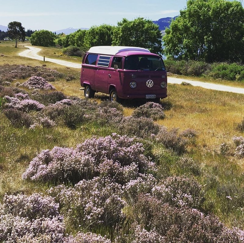 Pippi posing in the purple thyme on the shores of Lake Dunstan, New Zealand