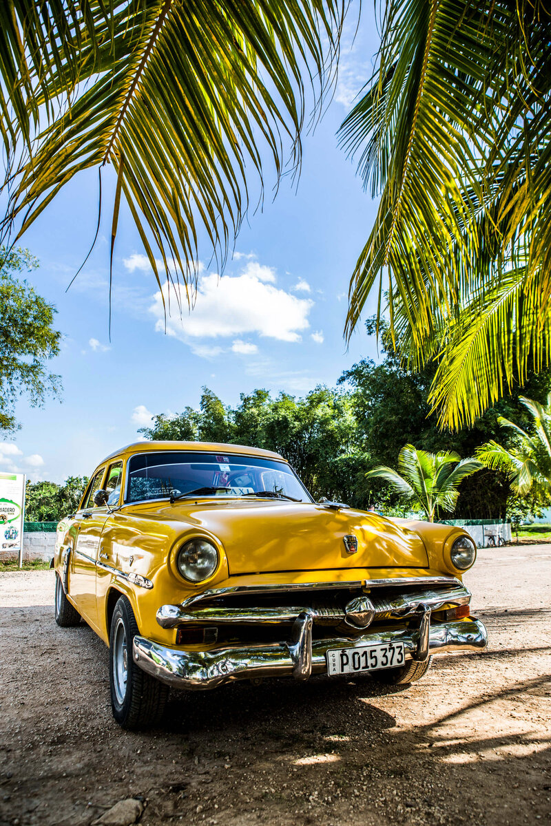 taxi under palm tree Cuba
