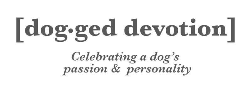 dogged devotions logo with tag line under grey