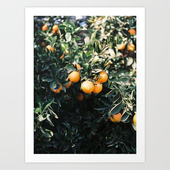 oranges-moody-colorful-travel-photography-botanical-green-wall-with-oranges1887026-prints