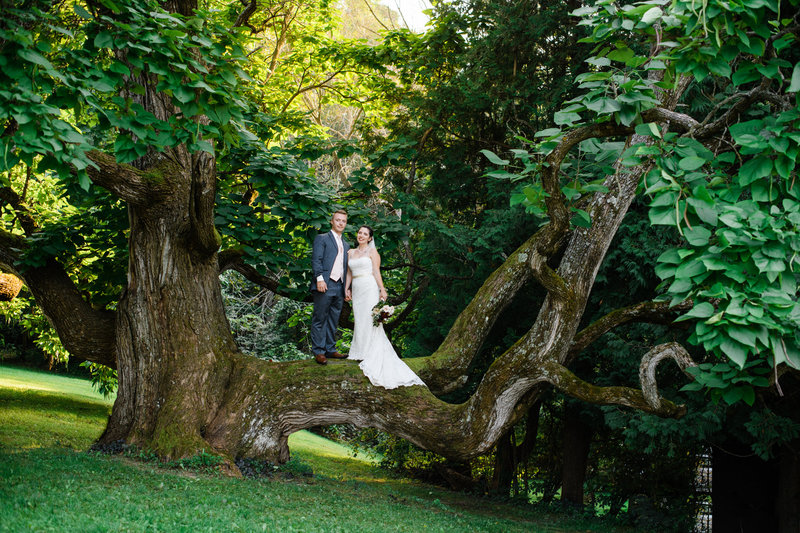 Bride and Groom in Catulpa Tree at  the Hilltop in Spring Green
