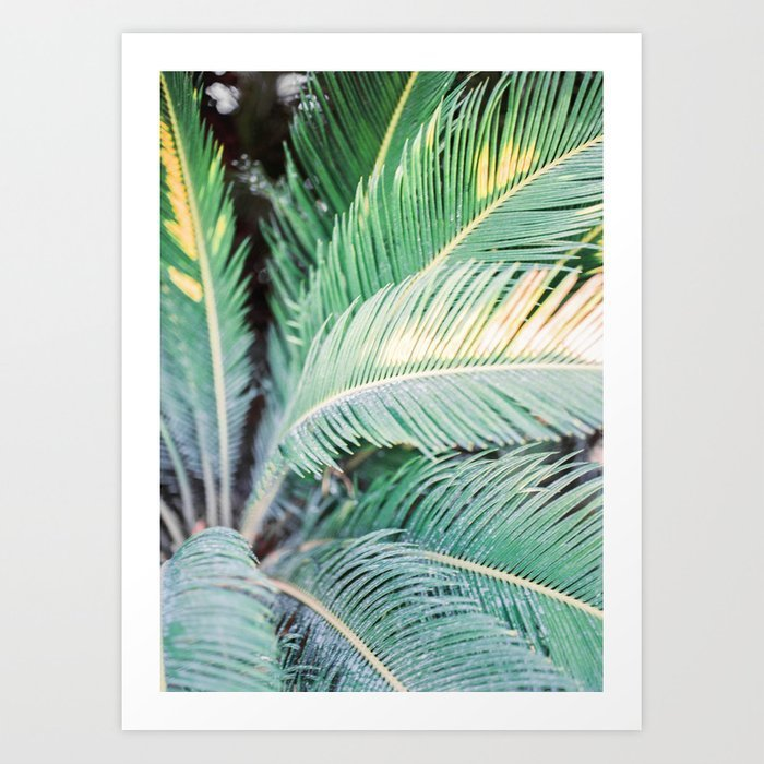 turquoise-green-palm-trees-in-ibiza-travel-wanderlust-photography-colorful-wall-art-prints