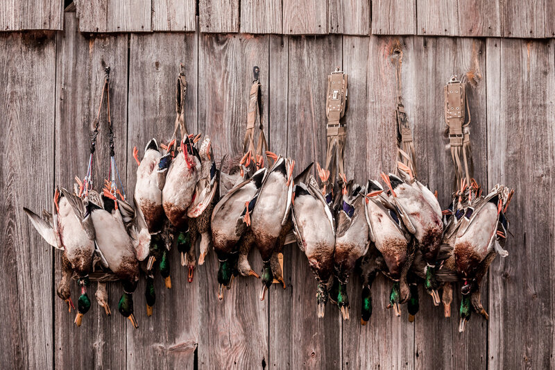 Central Kansas waterfowl hunting outfitter and guides-211
