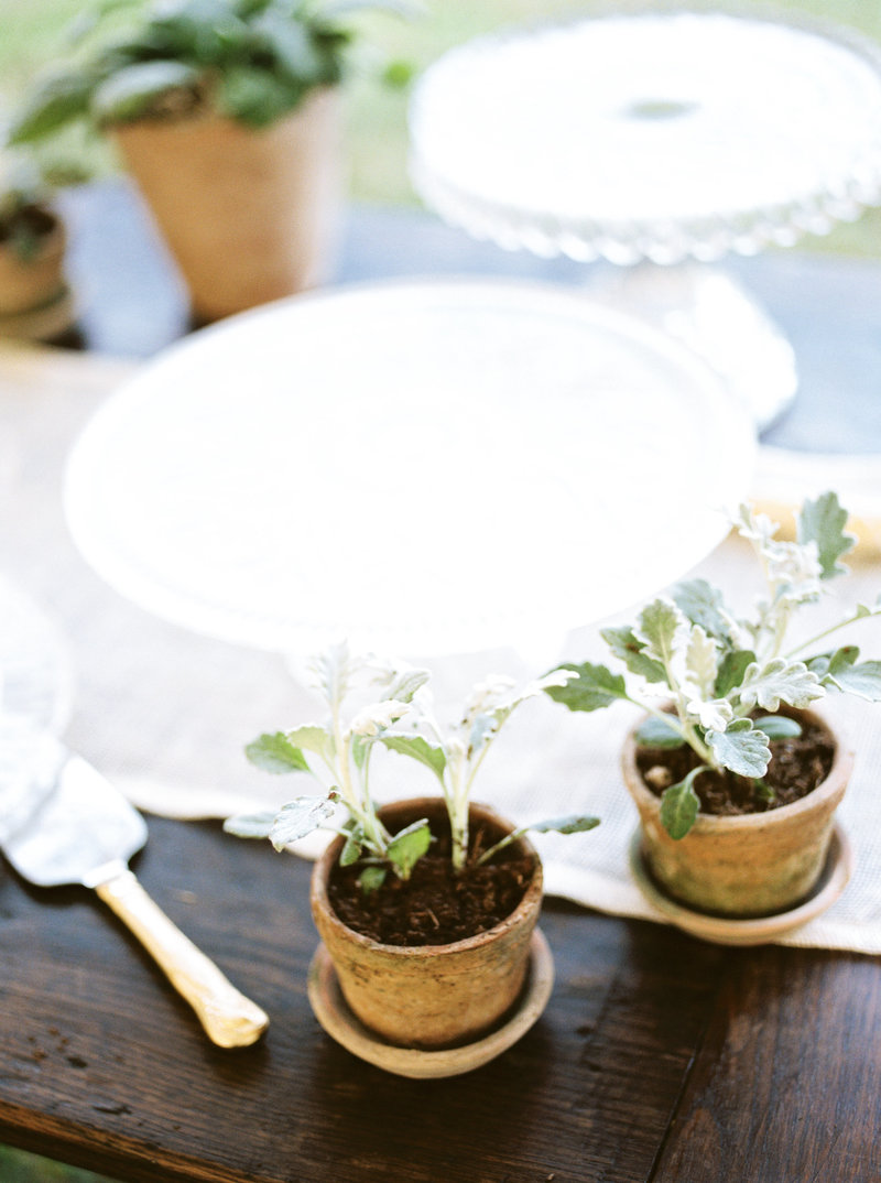 potted succulents wedding reception outdoor