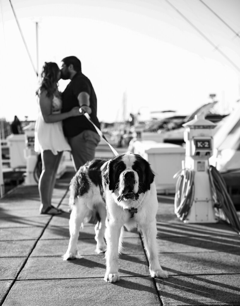 Couple walks theor dog on dock at Erie Yacht Club during engagement photos
