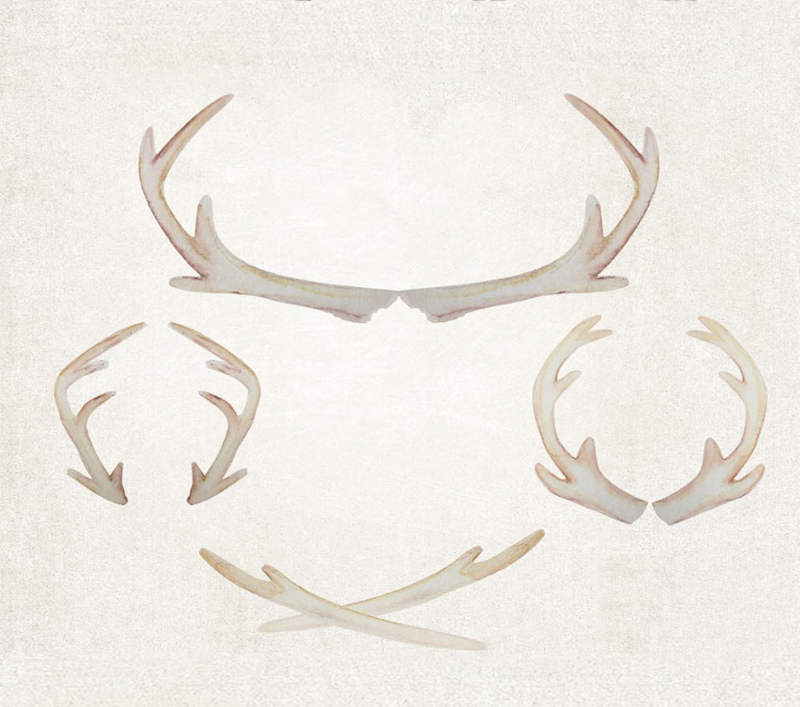 antlers3