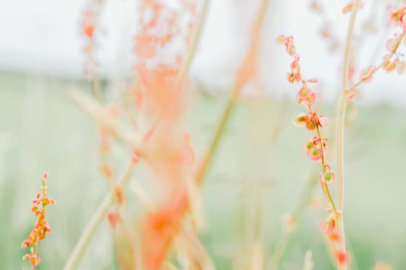 Jennifer_Sanders_Photography_0420-meadow-001