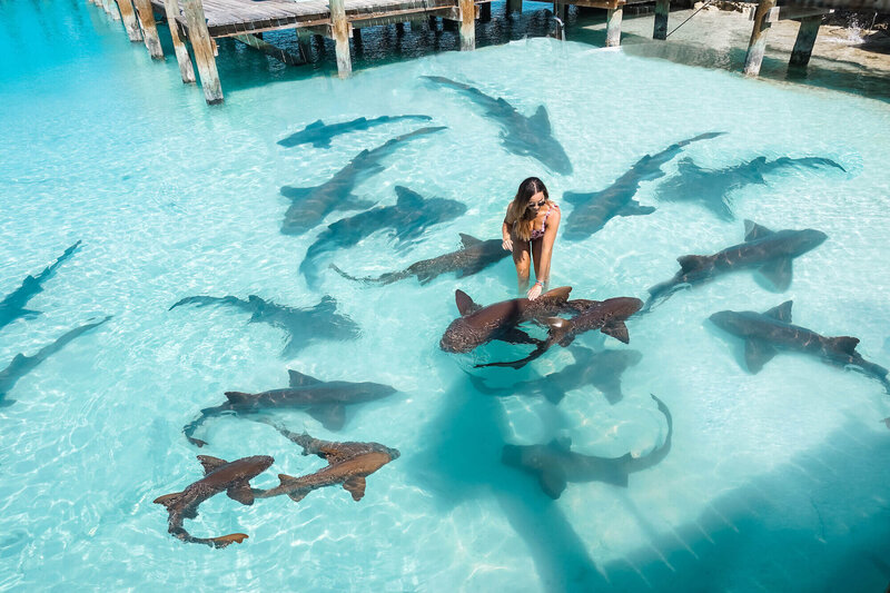 female travel groups - Isabella standing in pool with sharks
