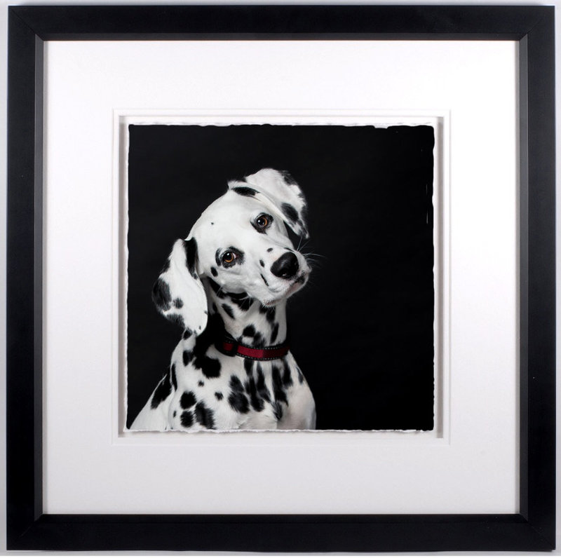 Fine Art Frame dalmation