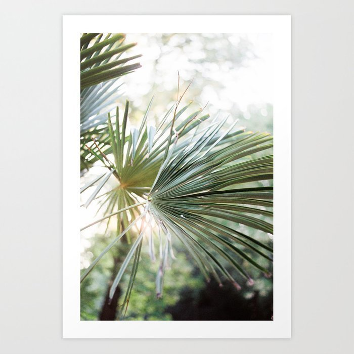 palm-tree-in-golden-hour-ethereal-colors-close-up-wanderlust-botanical-print-prints