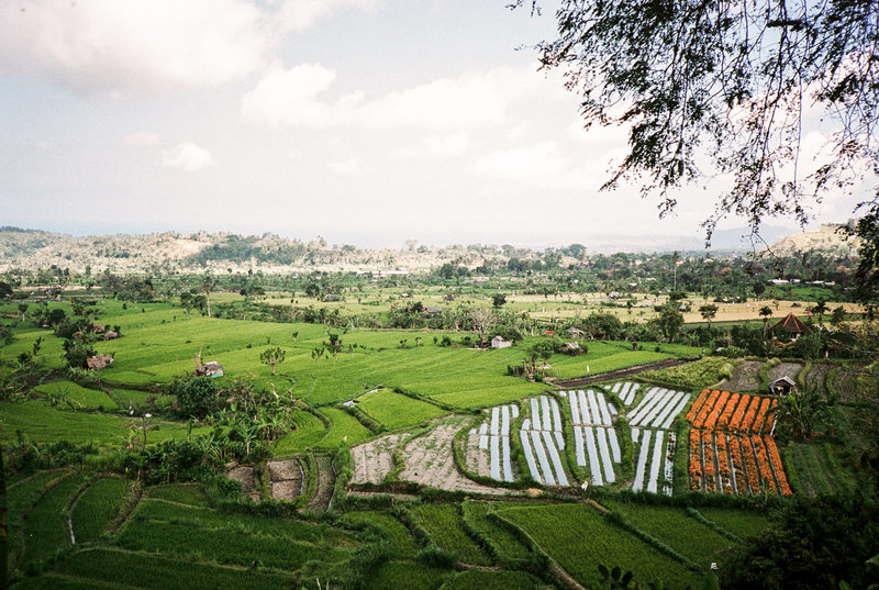 Country side rice terrace in Bali
