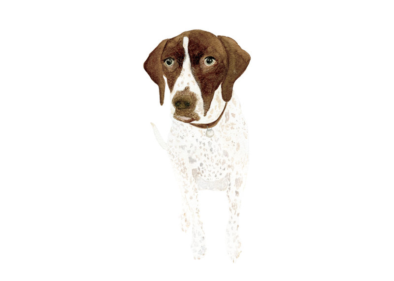 watercolor-pet-portrait-Tilly-H-The-Welcoming-District