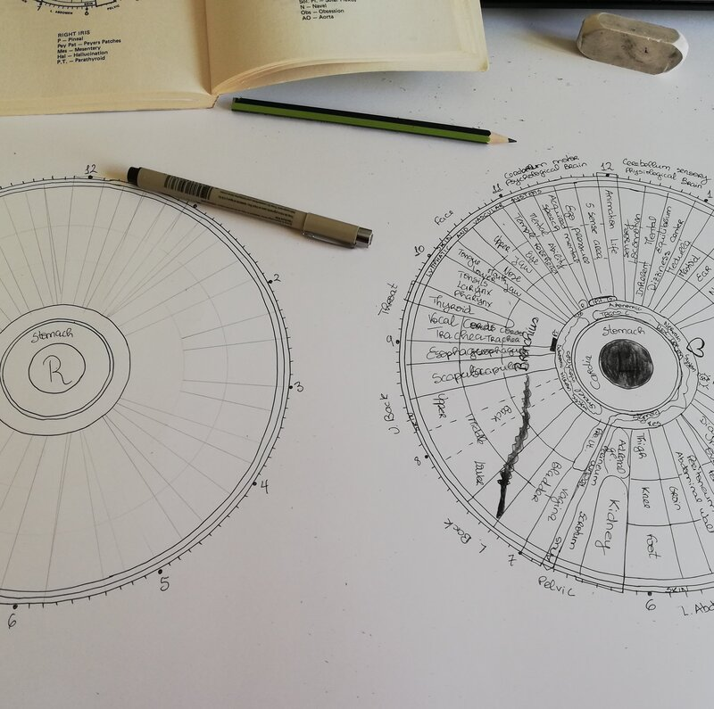 Iridology chart professional Iridology studies