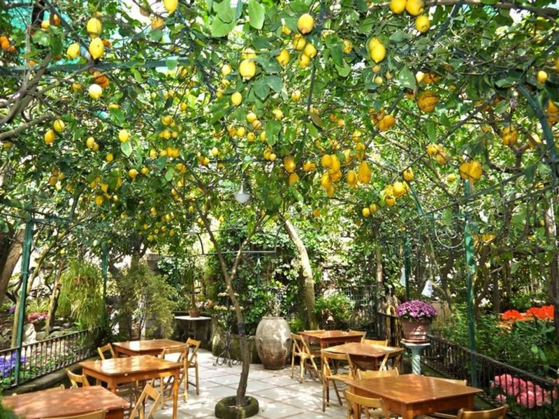 Sorrento Italy Lemon Grove