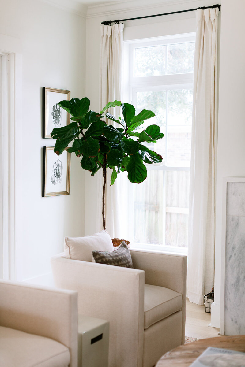 Minimalist living room decor with plant