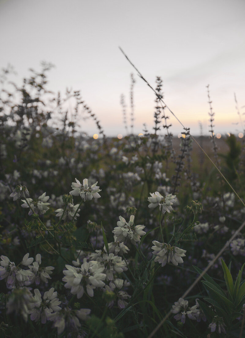 Flowers in a dark field, communicating the need for PTSD Treatment and trauma therapy with a skilled EMDR therapist doing online EMDR therapy in California 91355
