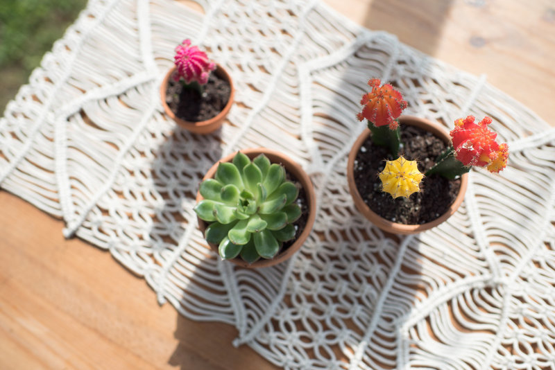 top view of succulents & cacti with bohemian decor  at an outdoor wedding with macrame table runner.